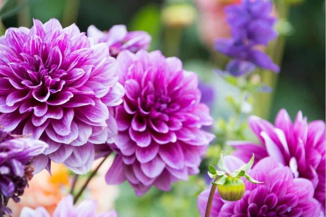 Best Flower Cover