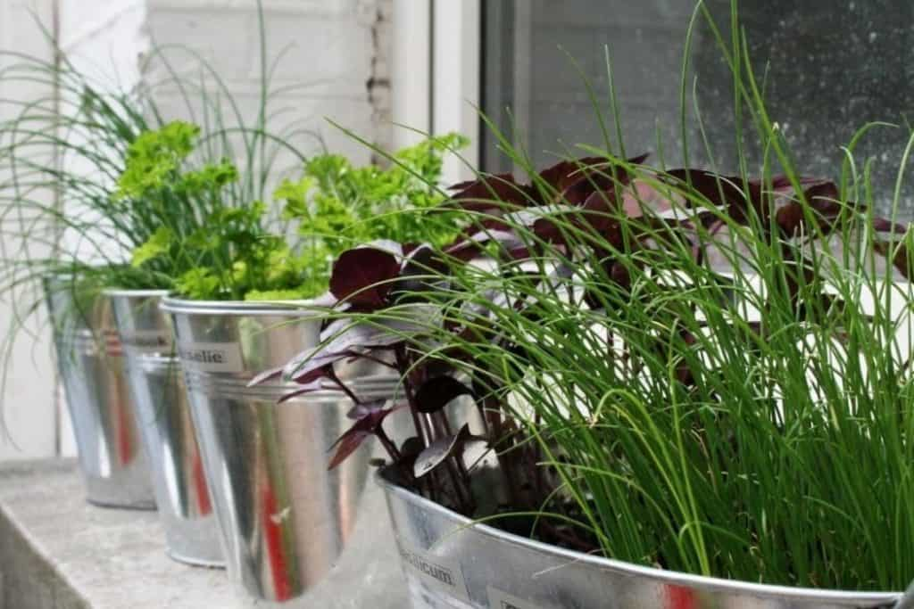 window herb