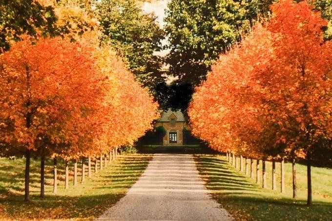 care of a red oak trees