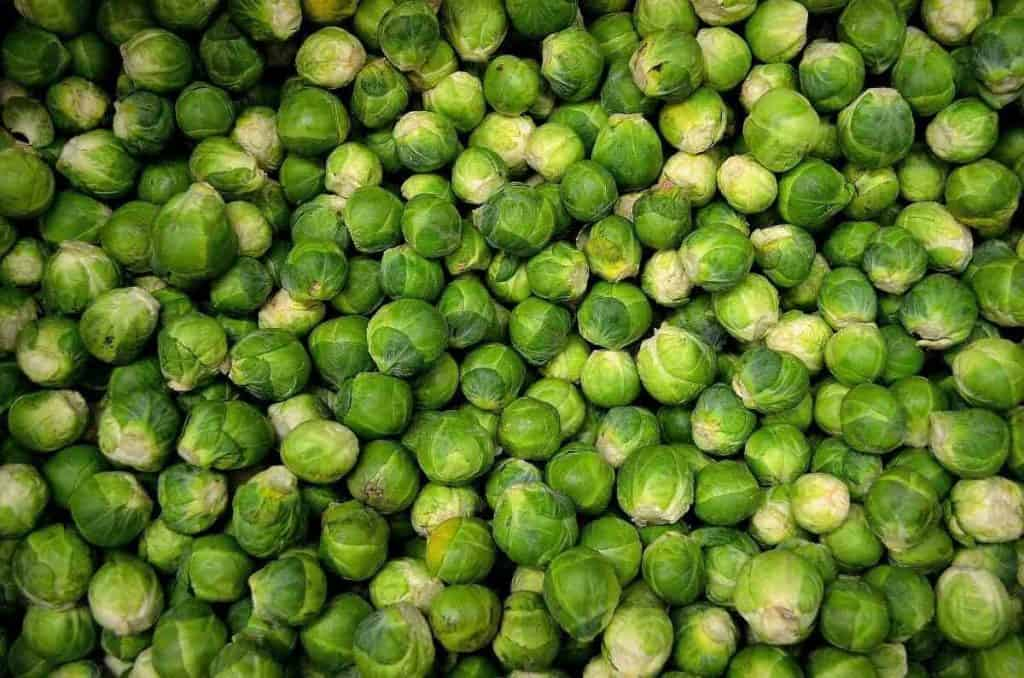 aeroponics brussels sprouts
