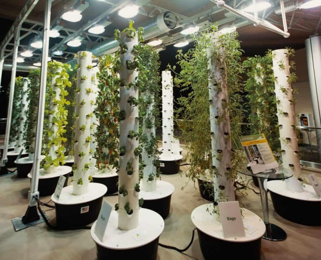 aeroponics herbs