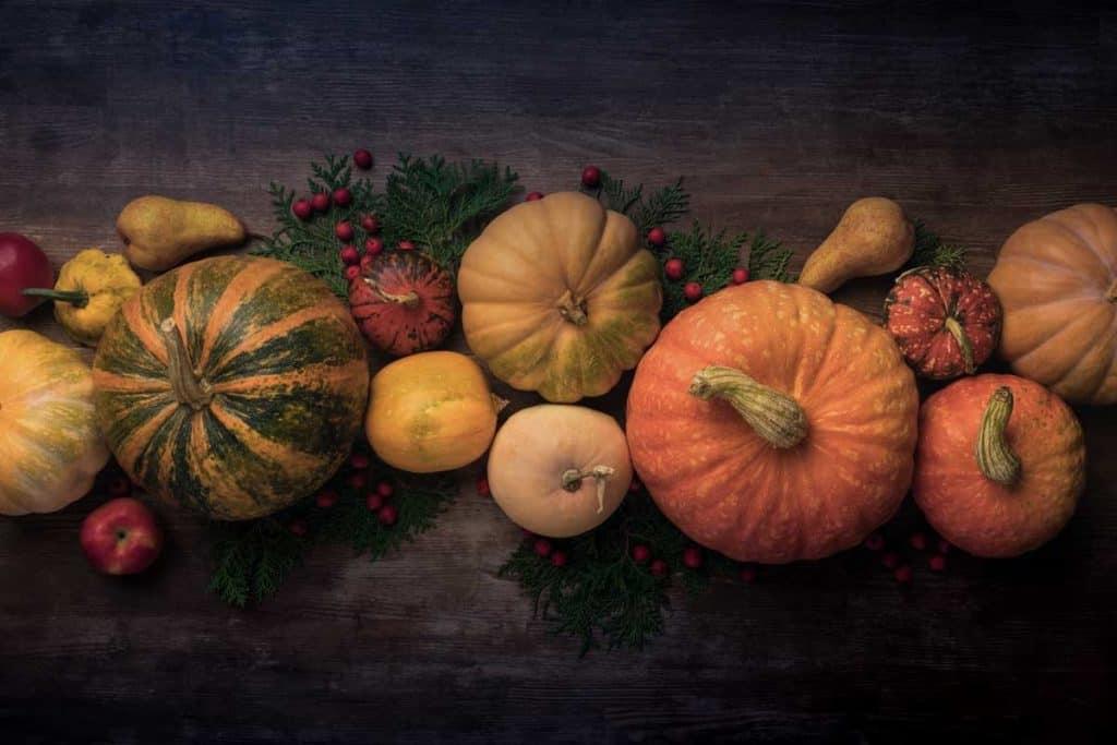 aeroponics pumpkins and gourds