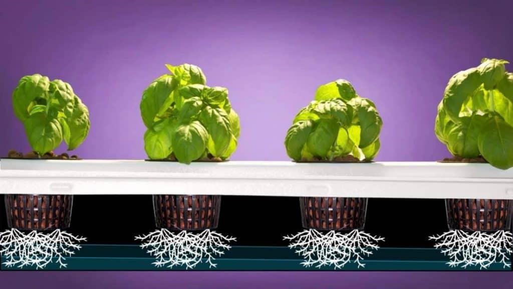 aeroponics watering