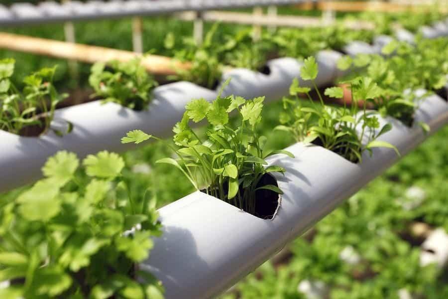 hydroponic better than aeroponics