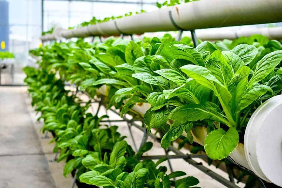 indoor farming system 2