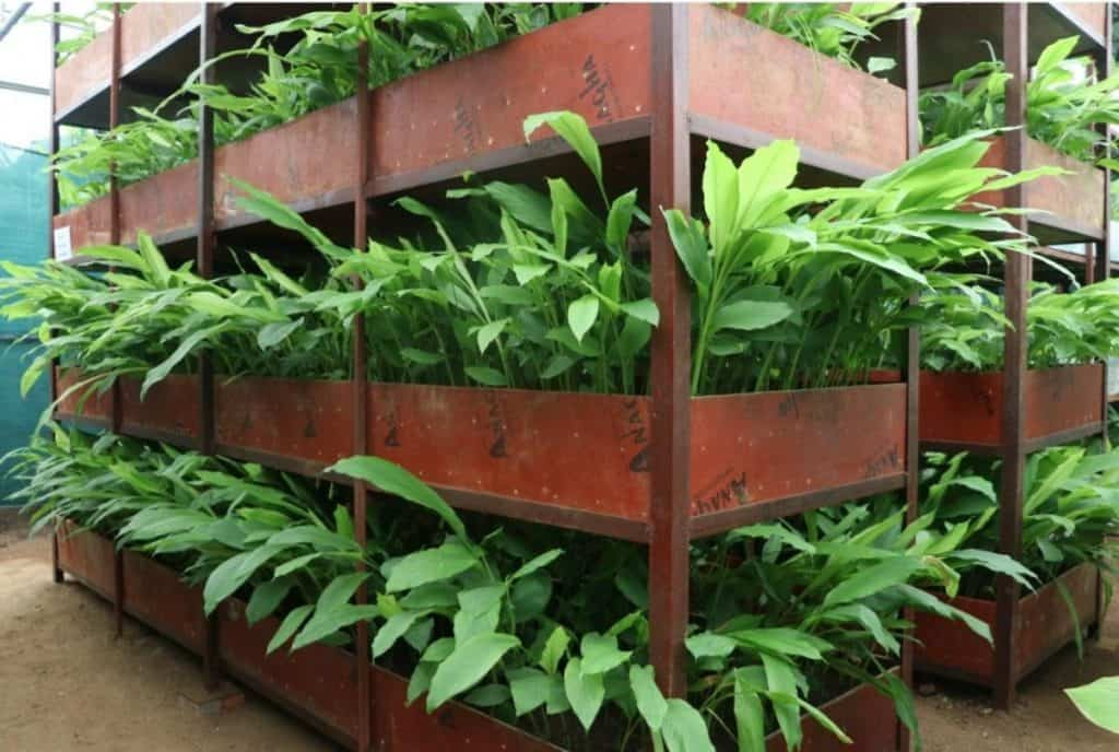 indoor farming with soil