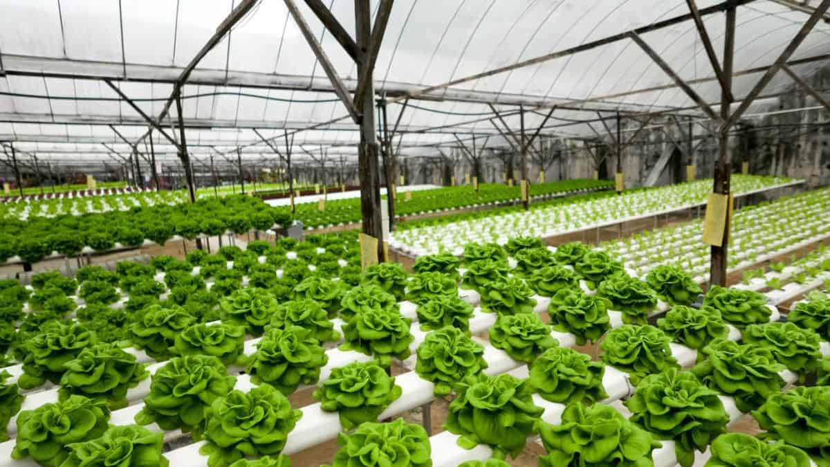 indoor farming without soil