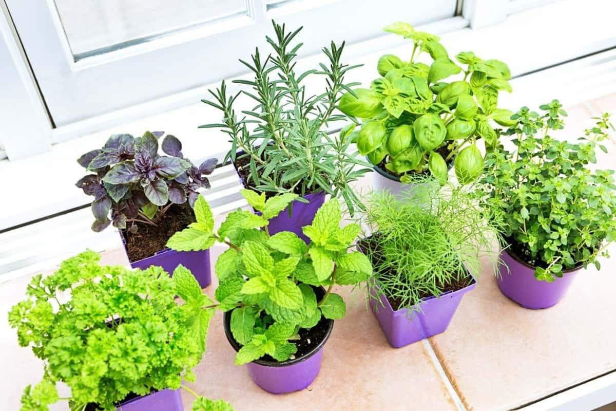 plants indoor farming